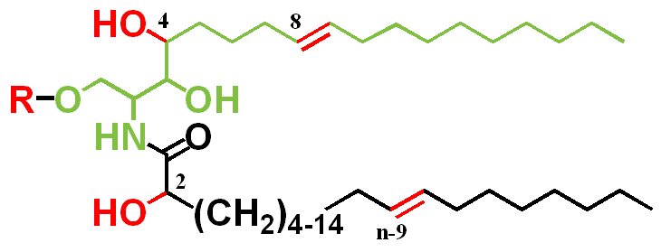structure  red  including desaturations  4  8 and n-9   hydroxylationsSphingolipid Structure